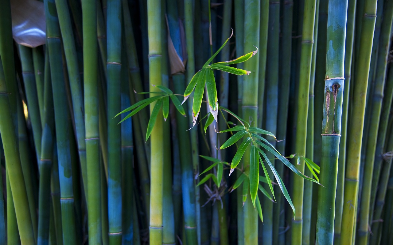 Bamboo Tree Forest Backgrounds