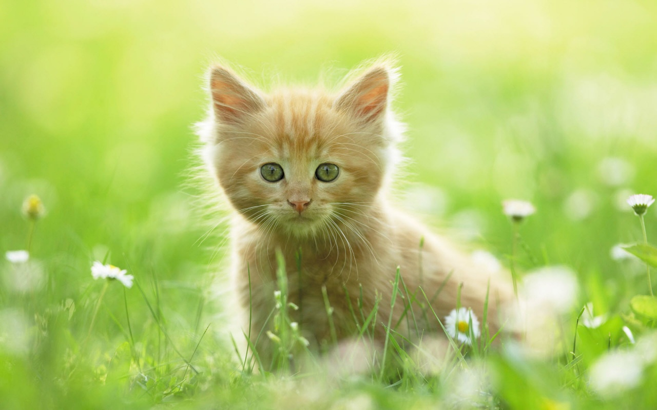 Cute Kitten Looking For Mom Backgrounds