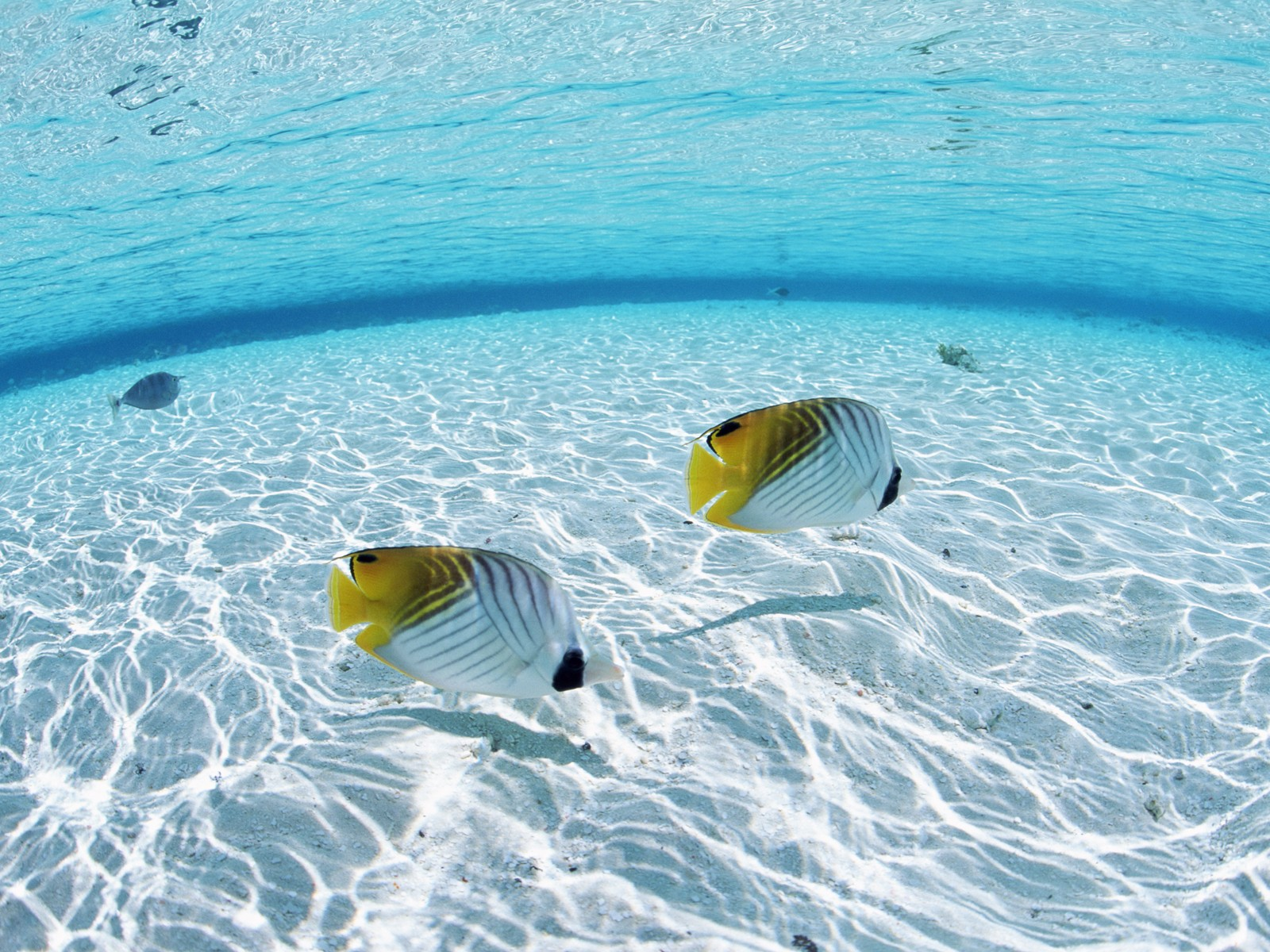 Maldives Water and Fish Backgrounds