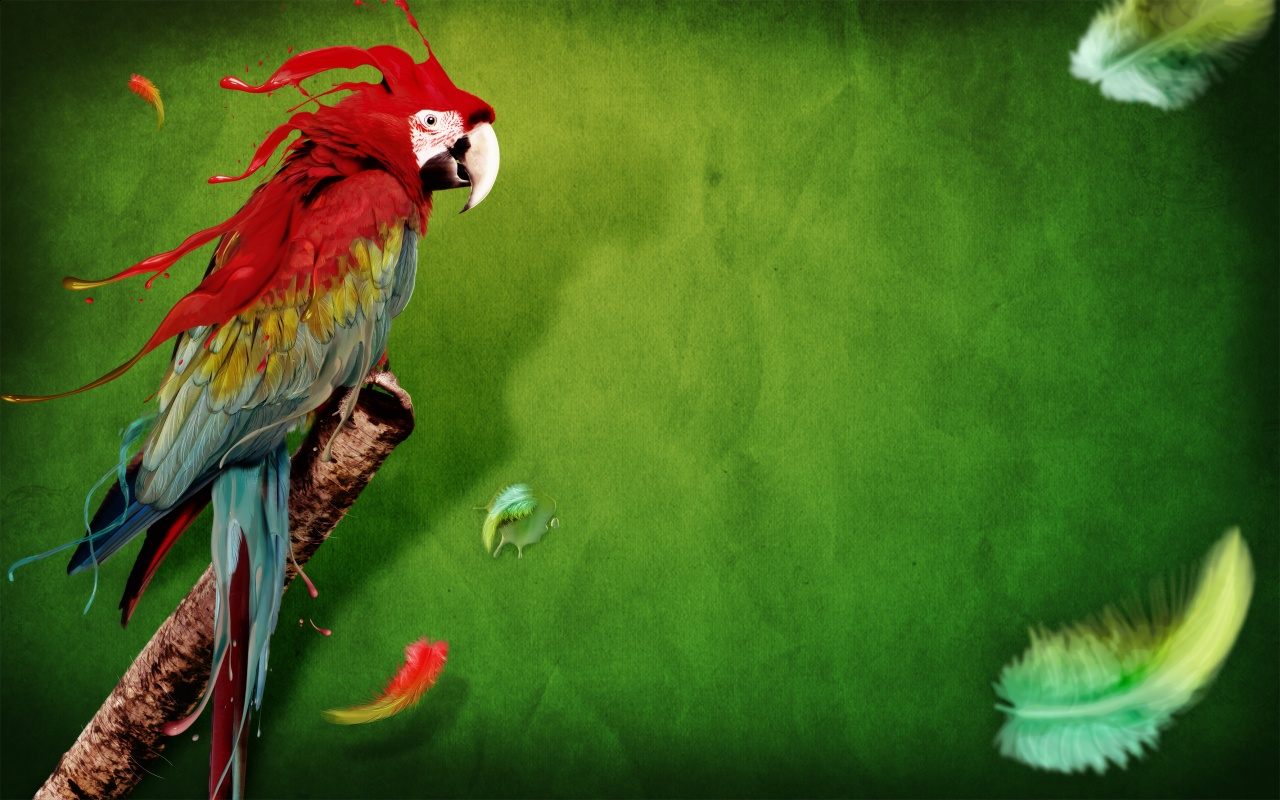 Parrot Feathers Backgrounds