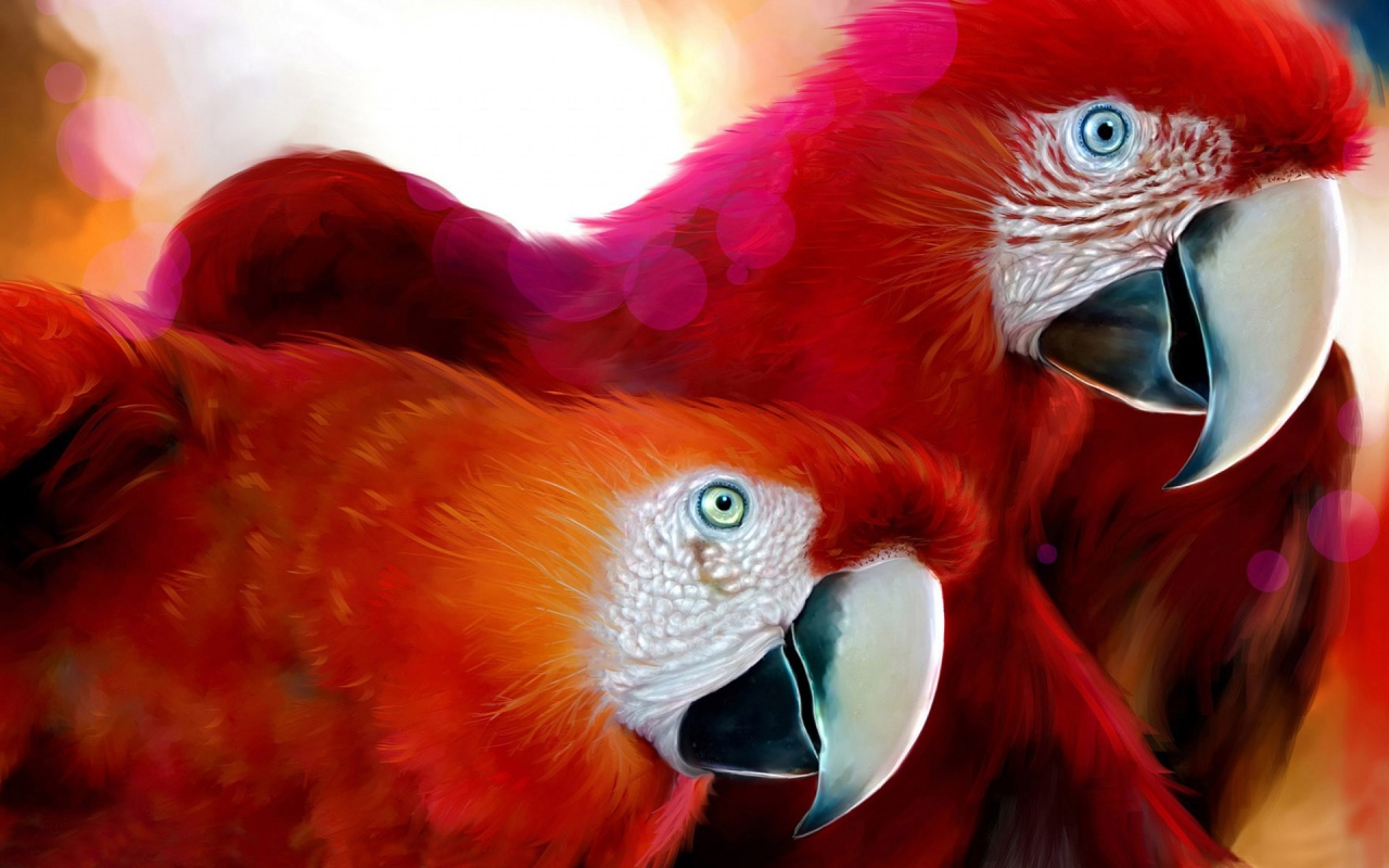 Red Beautiful Parrots Backgrounds