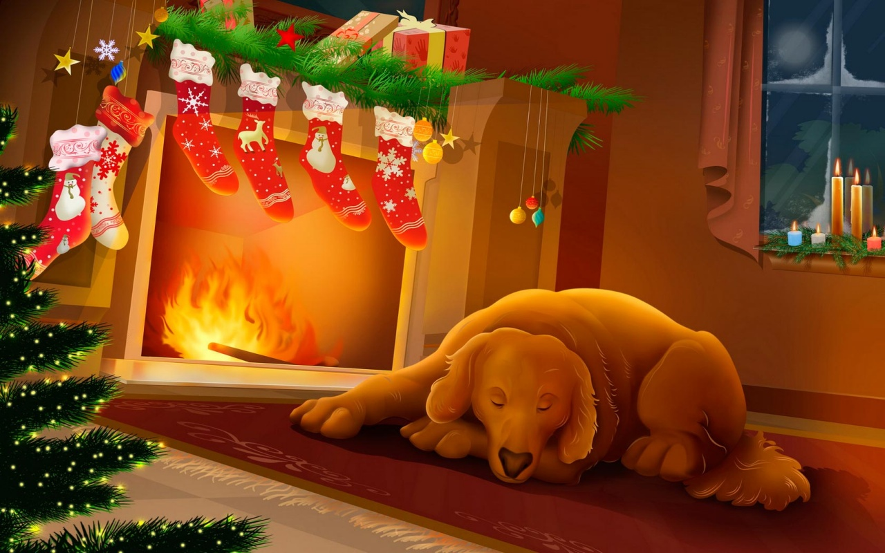 Sleeping Dog At Christmas Night Backgrounds