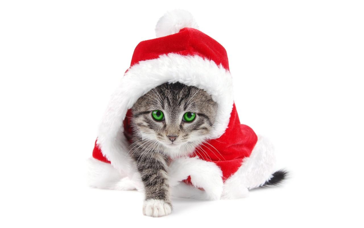 Smart Santa Cat