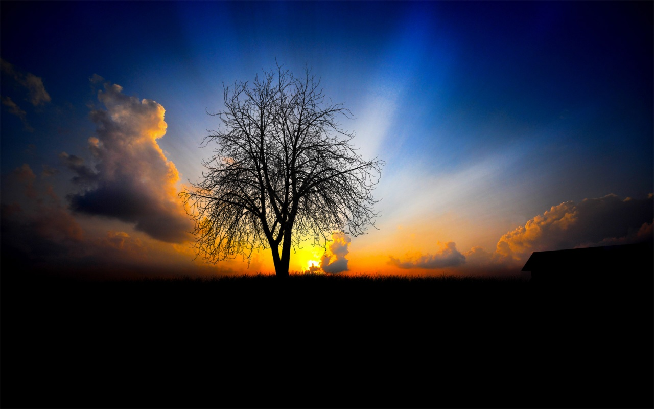 Best Night Sunset Field Backgrounds