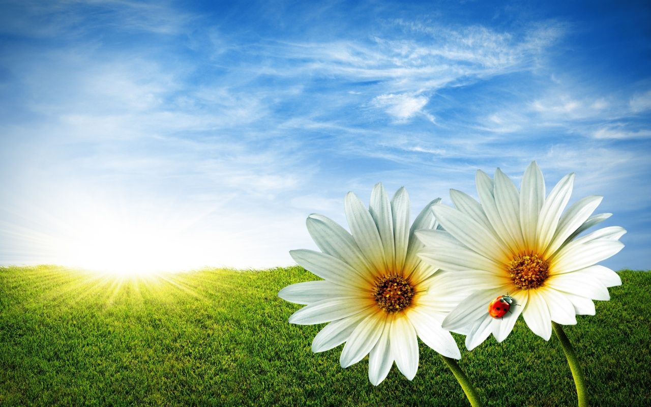 White Flowers Backgrounds