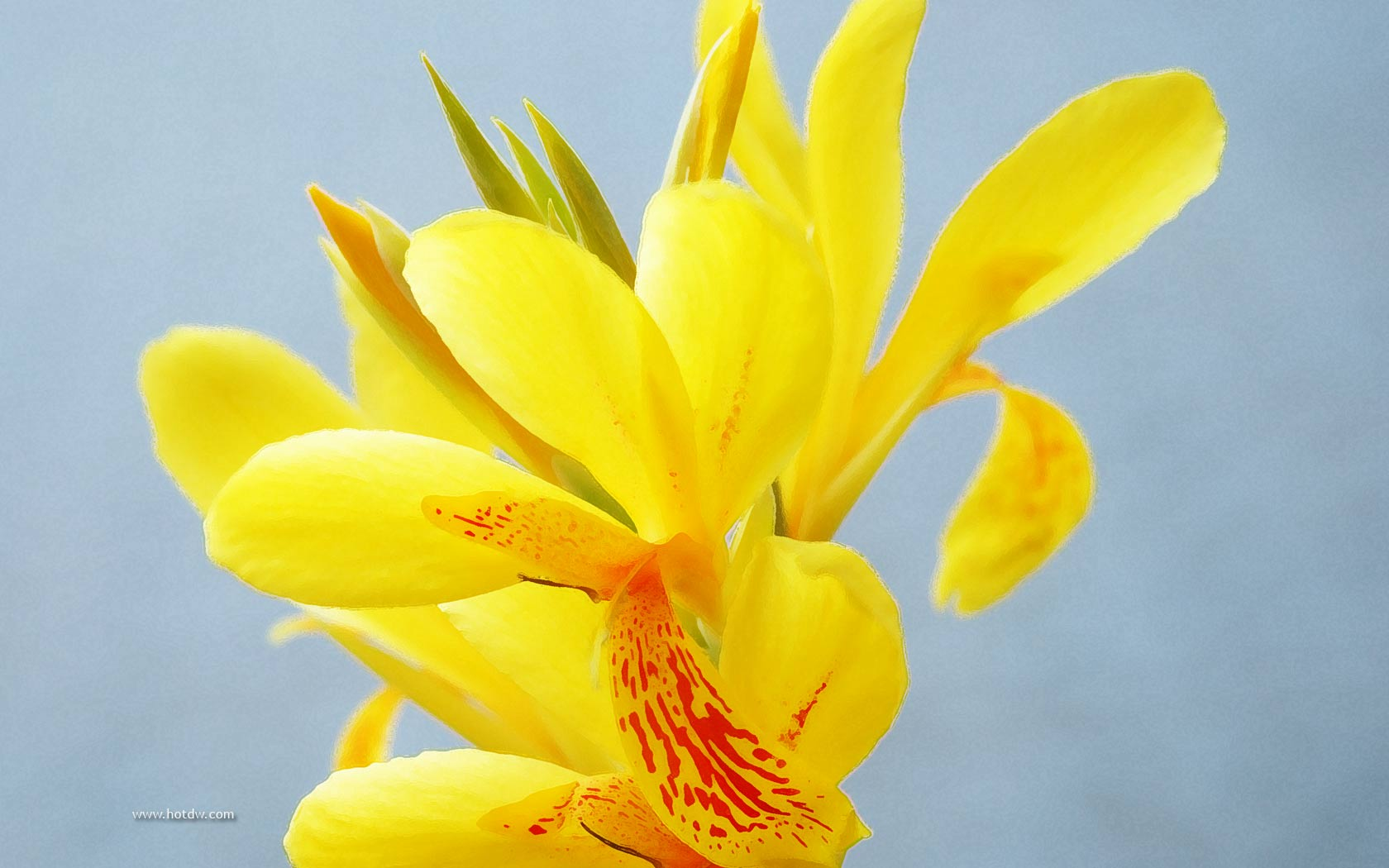 Yellow Flower Background Marvelous Computer Uploads Theme Backgrounds