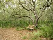 A Bench For Resting Backgrounds