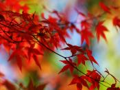 Autumn Fall Floral Backgrounds