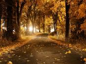 Autumn Orange Leaves Backgrounds