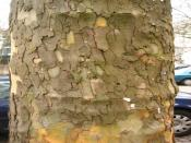 Bark Rind Tree  Backgrounds