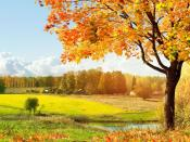 Beautiful Autumn Backgrounds