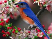 Beautiful Birds Animals Backgrounds