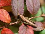 Beautiful Mantis Picture Backgrounds