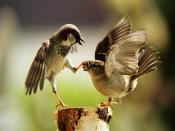 Birds Family Backgrounds