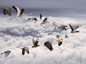 Birds Migration Above Clouds Backgrounds