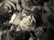 Blackwhite Rose Backgrounds