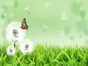 Butterfly Flower Home Backgrounds