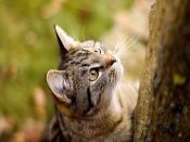 Cat Curious To Climb
