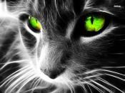 Cat with Green Eyes Backgrounds