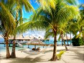 Coconut Trees Backgrounds