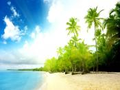 Coconuts Tree Beach Backgrounds