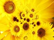 Cool Sunflowers Backgrounds