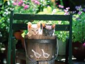 Cuddly Kittens in Backyard Backgrounds