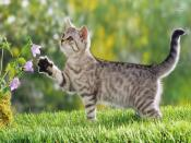 Cute Kitten Backgrounds