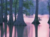 Cypress Trees Horseshoe Lake Conservation Area Illinois Backgrounds