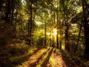 Dense Tall Trees Backgrounds