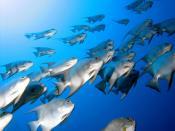 Desktop Fishes Animals Backgrounds