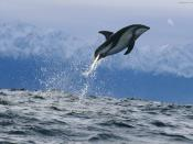 Dolphin Dusky Zealand Underwater Water Ocean Upload Backgrounds