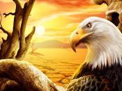 Eagle Orange Sunset Backgrounds