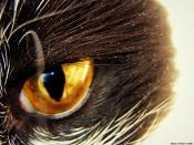 Eye of the Cat Backgrounds