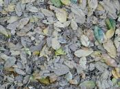 Fallen Leaves Backgrounds