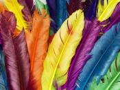 Feathers In Colors Backgrounds