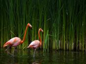 Flamingos Research Backgrounds
