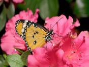 Flowers Animated Butterfly Backgrounds