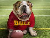 Funny Doggy Football Time Backgrounds