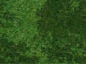 Grass sports Backgrounds