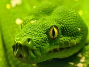Green Anaconda Wait For Prey Backgrounds