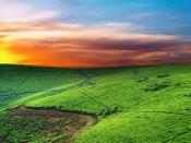 Green Mountain Grasslands Backgrounds