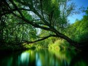 Green River Backgrounds