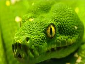 Green Snake Closeup Backgrounds