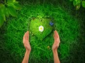 Heart Nature Backgrounds