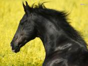 Horse Backgrounds