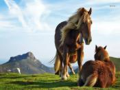 Horses Backgrounds