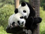 Hugging Pandas Backgrounds