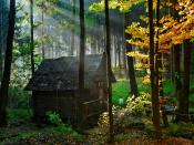 Hut In Forest Backgrounds