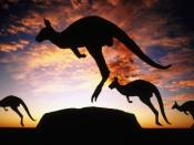 Jumping Kangaroos Backgrounds